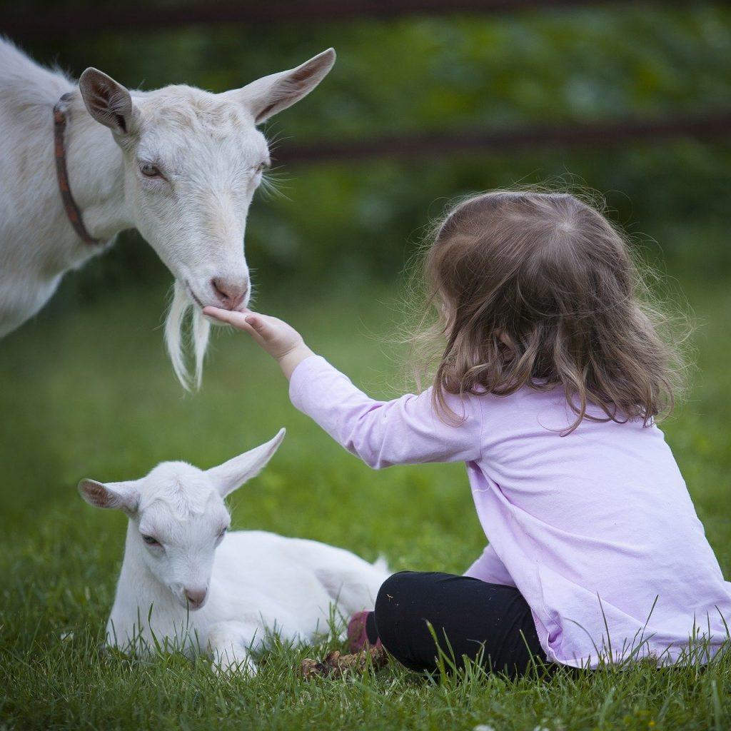 goat-3017394_1920